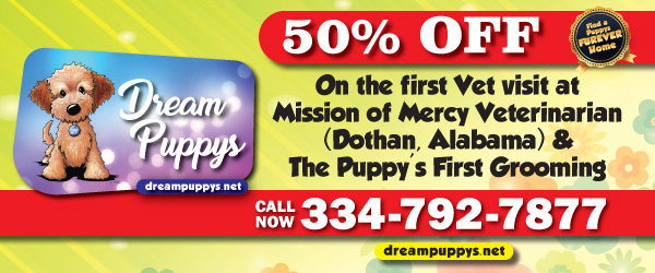 Dreampuppys Net Pet Shop With Puppies For Sale Grooming And Boarding