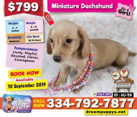 dreampuppys net – Pet Shop with Puppies for sale, Grooming